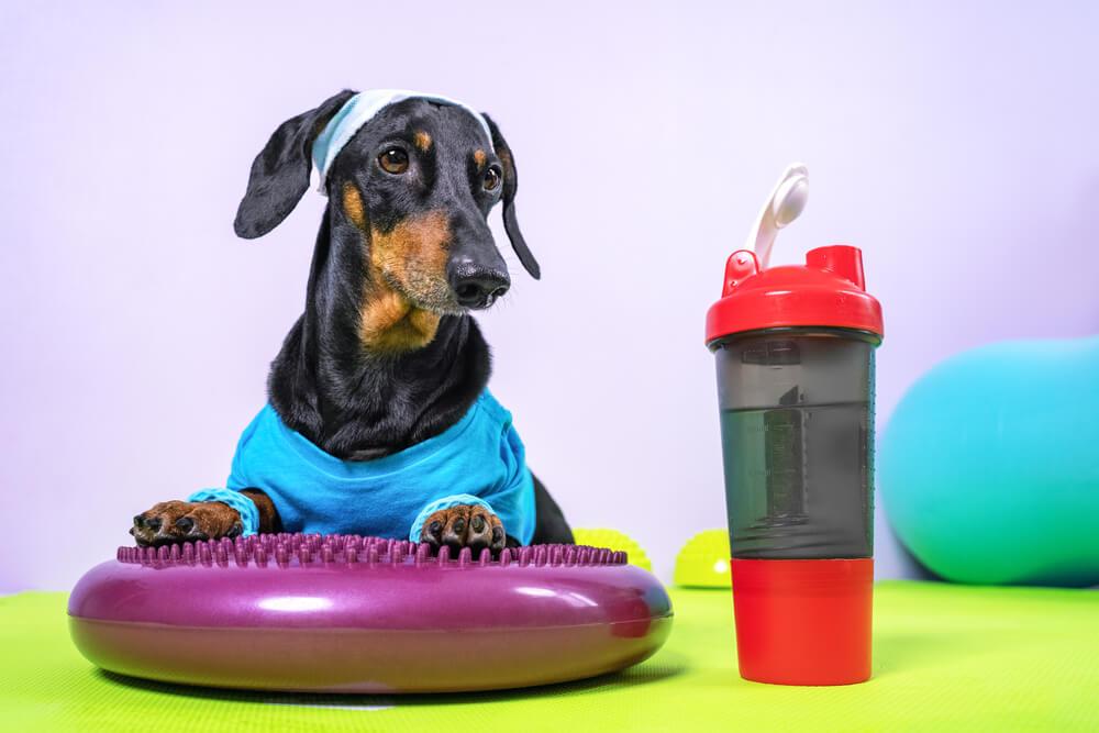今日から始められる愛犬のダイエット方法