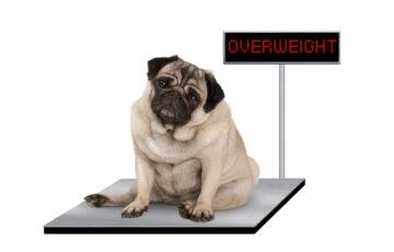 肥満気味?愛犬のダイエット方法について紹介